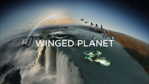 Winged Planet